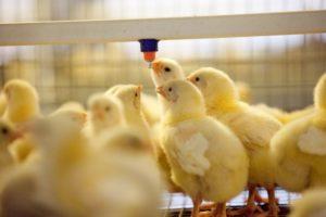 Моющие средства для птицефабрик